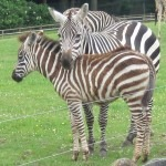 cork wildlife park (3)